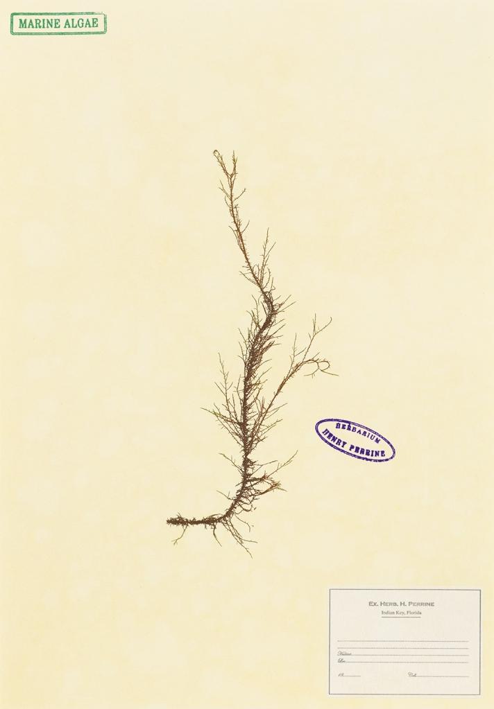 Herbarium 7